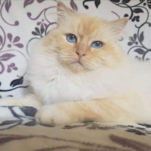 Lagon Bleu des Cœurs Bohême